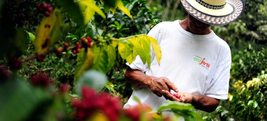 Planet Coffee promotes environmental stewardship by supporting small holding organic coffee bean growers like this one